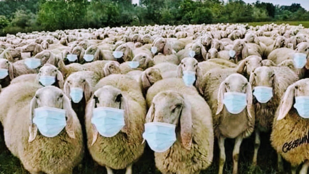 mask masks sheep